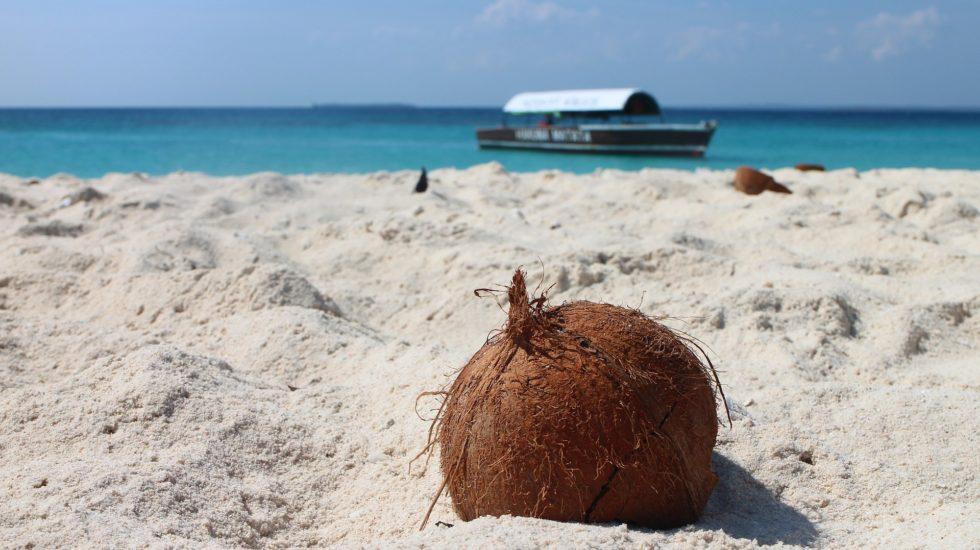 coconut-1577282_1920