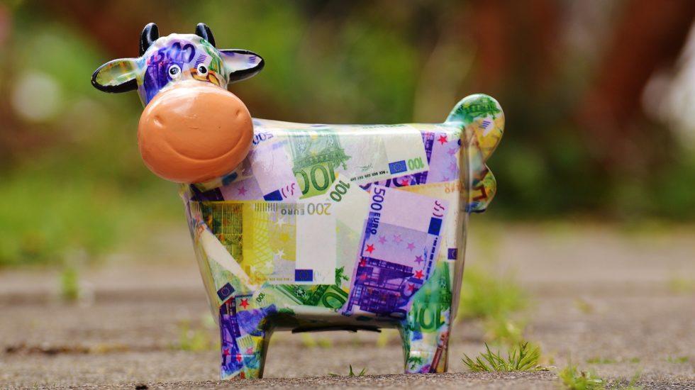 cow-1357210_1920