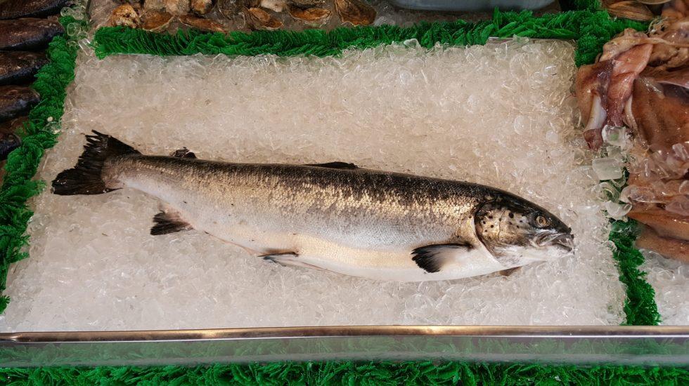 salmon-1958945_1920