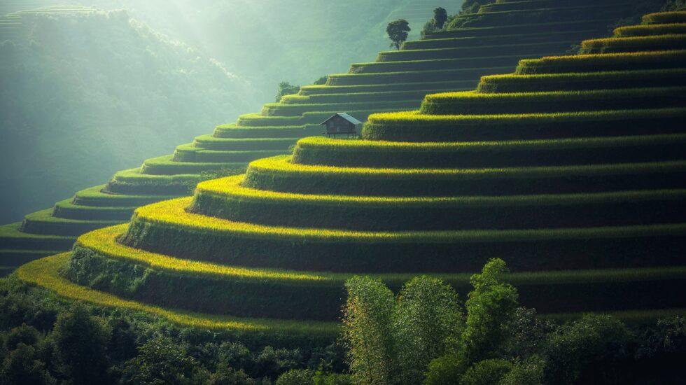 rice-plantation-1822444_1920